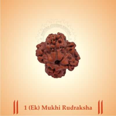 1-EK-MUKHI RUDRAKSHA BY PAVITRAJYOTISH