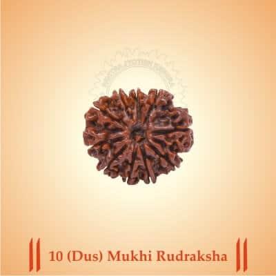 10-DUS-MUKHI RUDRAKSHA BY PAVITRAJYOTISH