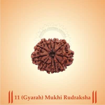 11-GYARAH-MUKHI RUDRAKSHA BY PAVITRAJYOTISH