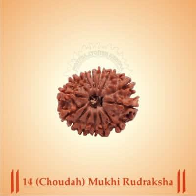 14-CHOUDAH-MUKHI RUDRAKSHA BY PAVITRAJYOTISH