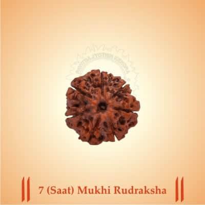 7-SAAT-MUKHI RUDRAKSHA BY PAVITRAJYOTISH