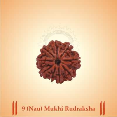 9-NAU-MUKHI RUDRAKSHA BY PAVITRAJYOTISH