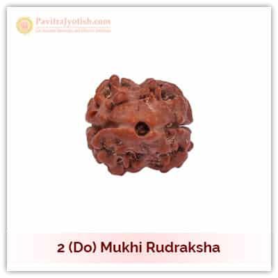 Original Nepali Do Mukhi Two Faced Rudraksha