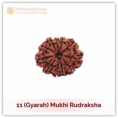 Original Nepali Gyarah Mukhi Eleven Faced Rudraksha