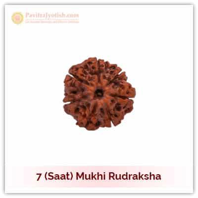 Original Nepali Saat Mukhi Seven Faced Rudraksha