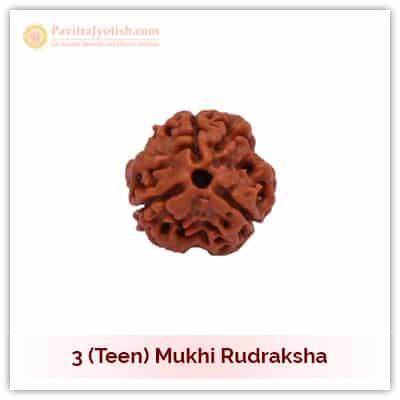3 (Teen) Mukhi Rudraksha
