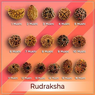Original Rudraksha